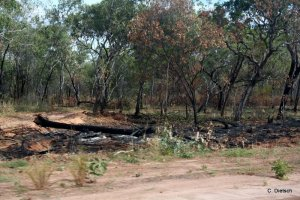 WHV 2014- Australia- Darwin Broome (55)